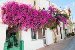 Street, houses and flowers Stock Photography