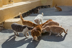 Street hungry cats Stock Photography