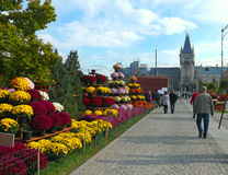 Street of Iasi, Romania Royalty Free Stock Photo