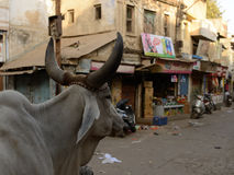 Street in India Royalty Free Stock Images