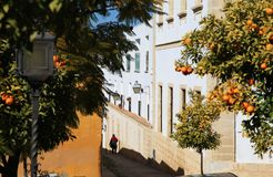 Jerez de la Frontera in february, Andalusia, Spain royalty free stock photography