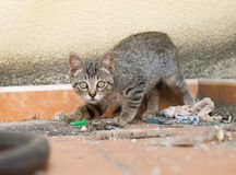 Street Kitten Stock Images