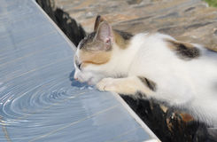Street kitten drinking water. Street kitten drink water from the pool, standing on his hind legs, and creates ripples in the water Royalty Free Stock Photography
