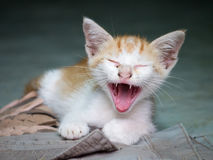 The Street kitten gape. According to home Stock Image