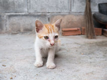 The Street kitten gape. According to home Stock Photography
