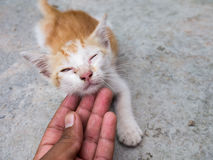 The Street kitten gape. According to home Royalty Free Stock Photos