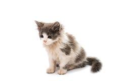 Street kitten Royalty Free Stock Images