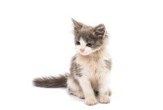 Street kitten Stock Photos