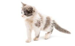 Street kitten Stock Photo