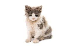 Street kitten Royalty Free Stock Photography