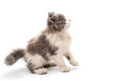 Street kitten Stock Images