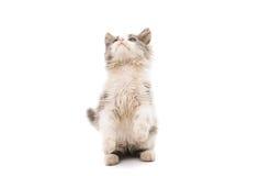 Street kitten Royalty Free Stock Photos