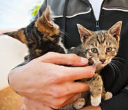Street kittens rescued. Loving hug, two small kittens, rescued from the street, taken to a local kernel stock images