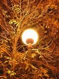 Street lamp. At night Royalty Free Stock Photography