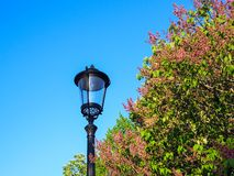Street lamp against a background of blossoming tree and blue sky stock image