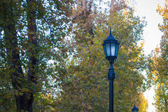 Street lamp against the trees. View of a treet light against the trees in the park Stock Images