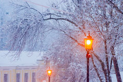 Street lamp on background of branches under snow Stock Photo