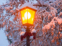 Street lamp on background of branches under snow Stock Photos