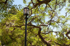 Street lamp on background of tropical trees Stock Photography