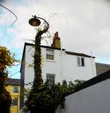 Street lamp in Brighton UK. Vegetation grown over a street lamp on a tiny pedestrian street Royalty Free Stock Image