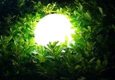 Street lamp in bush Royalty Free Stock Image