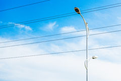 Street lamp. Erect the blue sky under the background of a lamppost and wire Royalty Free Stock Image