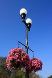 Street lamp and flower Royalty Free Stock Image