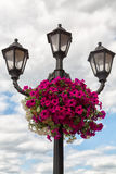 Street lamp with flowers. City street lamp decorated with multicolored flowers Royalty Free Stock Image