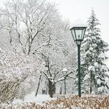Street lamp and forest park in winter Royalty Free Stock Photography