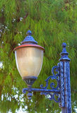 Street lamp in front of green fir Stock Photos