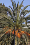 Street lamp in front of palm tree Stock Image