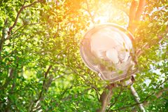 Street lamp with green tree energy with nature stock photos
