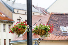 Street Lamp with hanging  Baskets with geraniums Stock Photos