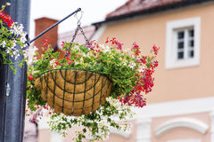 Street Lamp with hanging  Baskets with geraniums Royalty Free Stock Images