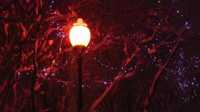 Street lamp illuminates the snow-covered branches of trees and  falling snow. stock footage