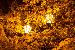 The street lamp in the leaves of the autumn trees. Autumn 2013. Russia. Moscow. Central Park of Culture and Rest named after Gorky. The street lamp in the stock photos
