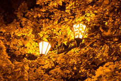 The street lamp in the leaves of the autumn trees. Autumn 2013. Russia. Moscow. Central Park of Culture and Rest named after Gorky. The street lamp in the stock photography