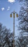 Street lamp lighting framed by trees Stock Image
