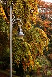 Street lamp. Street lights and trees in autumn park stock photo