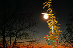 Street lamp at night through branches Stock Image