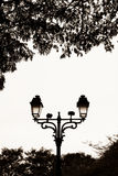 Street lamp in a park. (black and white Royalty Free Stock Image