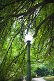 Street Lamp in a park Royalty Free Stock Photo
