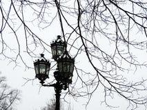 Street lamp in the park. St. Petersburg. Street lamp in the park in St. Petersburg Stock Photography