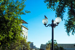 Street lamp. A pigeon sitting on a street lamp at the park Stock Images