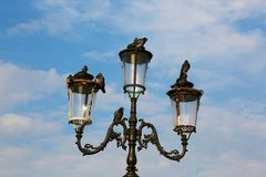 Street lamp with pigeons. Many pigeons on street lamps stock images