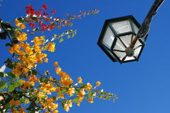 Street lamp in Portugal. A street lamp and Bougainvillea in Portugal Stock Photo