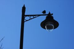 Street lamp shade. In the city Stock Photo