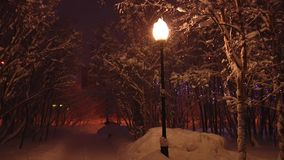 Street lamp in the snowy Park lights falling snow. stock video footage