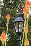 Street lamp surrounded by flowers Royalty Free Stock Image
