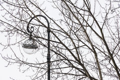 Street lamp and tree branches. On the background of overcast winter sky Royalty Free Stock Photos